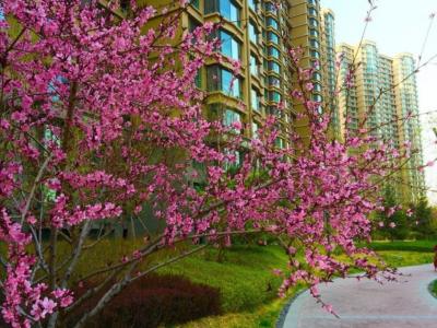 天洋城4代是燕郊住宅当中的优质楼盘吗?目前价格是多少?